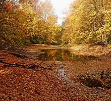 Autumn Beauty At The Pond by Debbie Oppermann