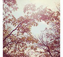 November Woodlands Photographic Print