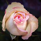 Delightful roses by ♥⊱ B. Randi Bailey