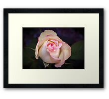 Pink-tipped highlights Framed Print