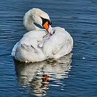 Preening The Feathers by Susie Peek
