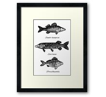 Zander, pike and perch Framed Print