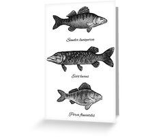 Zander, pike and perch Greeting Card
