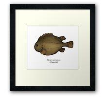 Lumpfish Framed Print