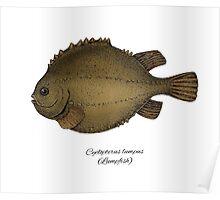 Lumpfish Poster