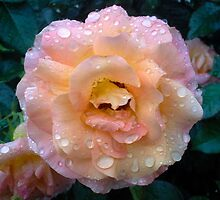 PINK ROSE ON A RAINY DAY by JoAnnHayden
