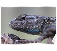 Western Fence Lizard Poster