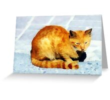 red tabby cat on the pavement Greeting Card