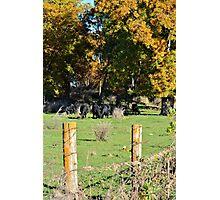 Angus Autumn Photographic Print