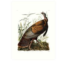 Wild Turkey -  John James Audubon Art Print