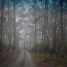 Into The Mist by garts
