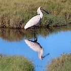 Spoonbill by Sandy1949