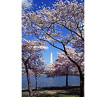 Washington Monument Through Cherry Blossoms Photographic Print