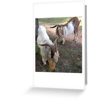 Buck Shot and Gold Rush Greeting Card
