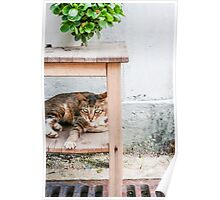 Cat under table Poster