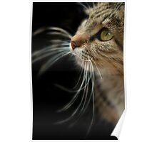 portrait of cat on black background Poster