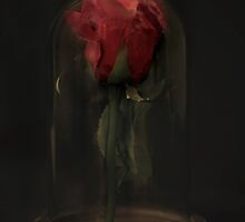 The Enchanted Rose (Beauty and The Beast) by Weykman R. Gomes