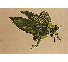 Christmas beetle 01 Photographic Print