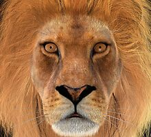 Male Lion by Vac1
