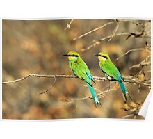 Bee-eater Greens - Mother and Chick of Spring Poster