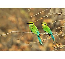 Bee-eater Greens - Mother and Chick of Spring Photographic Print