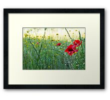 Natural World - Red Poppies Framed Print