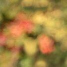 Autumn vines. by Paul Pasco