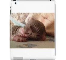 baby sphynx cat sleeping iPad Case/Skin