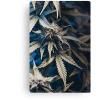 Weed indica sativa cannabis design floral hemp marijuana Canvas Print