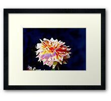 abstract dahlia Framed Print