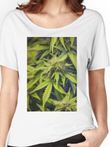 Green indica sativa cannabis design Women's Relaxed Fit T-Shirt