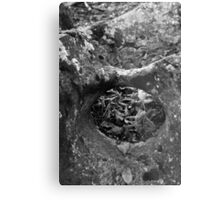hole in the rock in the woods Metal Print
