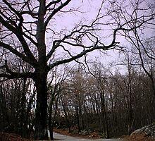 forest in winter by spetenfia