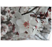 Spring Blossoms #5  Poster