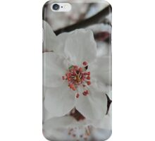 Spring Blossoms #5  iPhone Case/Skin