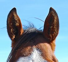 Curious horse by Lisa Pike