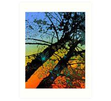 Pines at Sunset Art Print