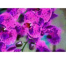 Fuchsia Power Photographic Print