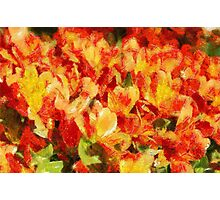 Floral Blossom Composition Photographic Print