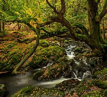 Shimna River by Adrian McGlynn