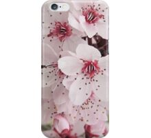 Spring Blossoms #6  iPhone Case/Skin