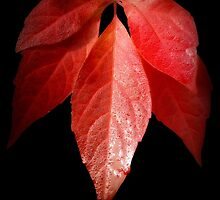 Autumn Red by Christine Lake