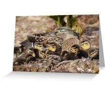 Mallard Ducklings (Anas platyrhynchos) with Mum Greeting Card