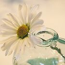A Daisy A Day by AngieDavies