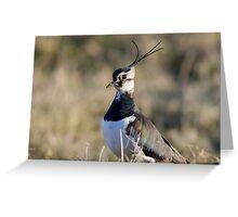 Male Lapwing (Vanellus vanellus) Greeting Card