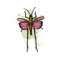 Romalea Microptera Photographic Print