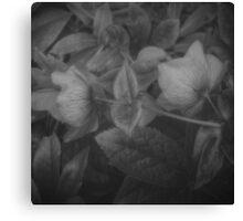 SECRET FLOWERS OF PARADOX (black & white) Canvas Print