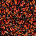 monarch butterflies by Elmira Amirova