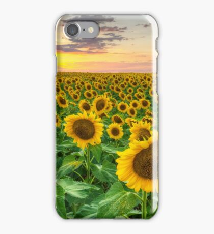 Sunflower Images - A Field of Golden Texas Wildflowers iPhone Case/Skin