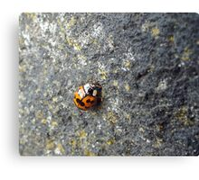 Lovely ladybird Canvas Print